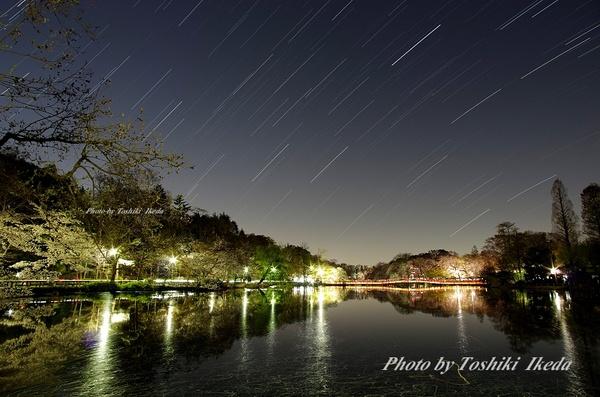 井の頭公園夜桜-1aa.jpg